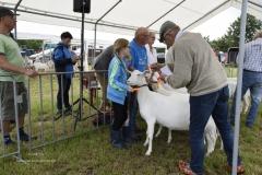 Paardendagen Walterswald Boerendag geitenkeuring (1)