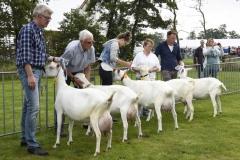 Paardendagen Walterswald Boerendag geitenkeuring (6)