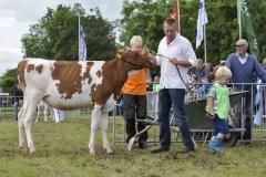 Paardendagen Walterswald Veekeuring Friesland (2)
