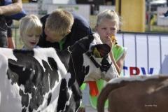 Paardendagen Walterswald Veekeuring Friesland (34)