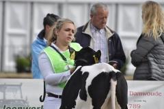 Paardendagen Walterswald Veekeuring Friesland (38)