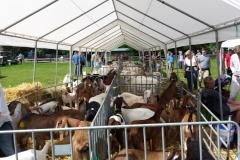 Geitenkeuring Friesland Walterswald Paardendagen
