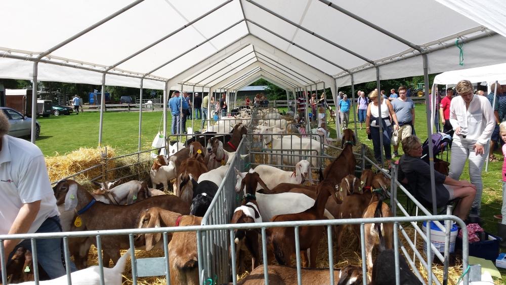 Paardendagen Walterswald Boerendag geitenkeuring (22)