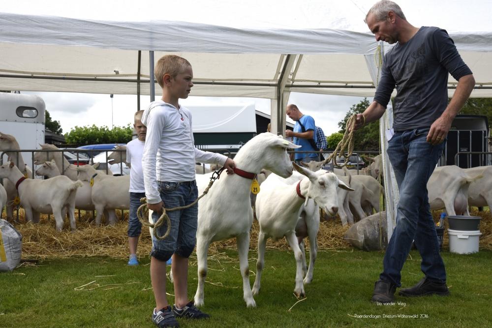 Paardendagen Walterswald Boerendag geitenkeuring (4)
