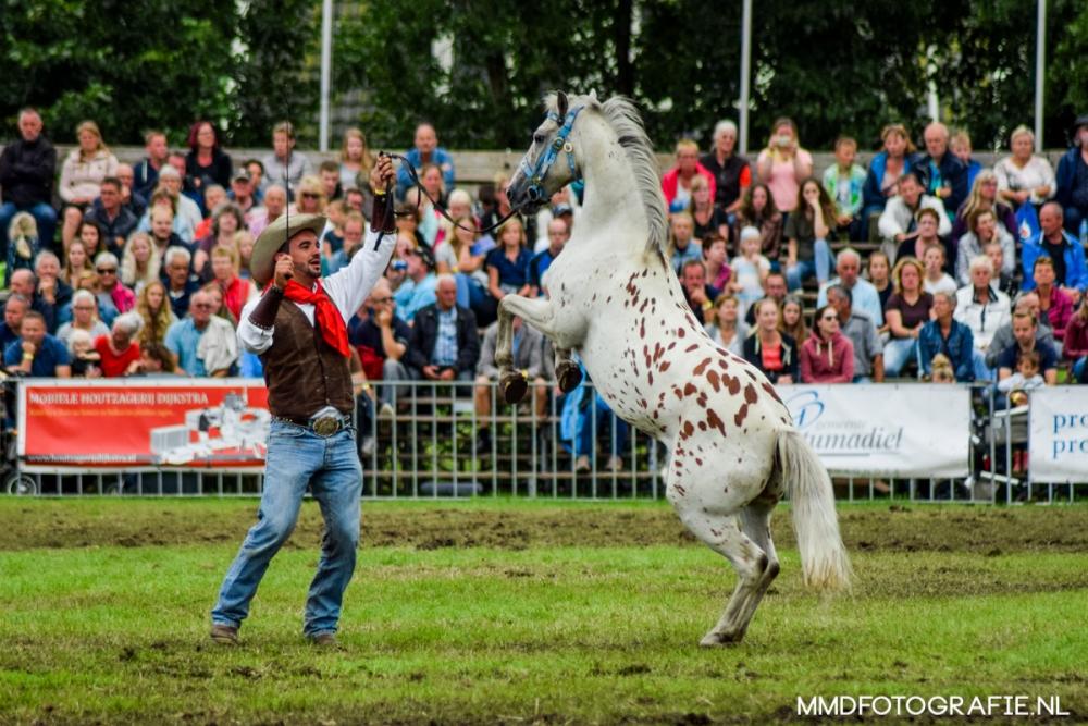 Paardendagen Paardenkrachtenshow Walterswald (13)