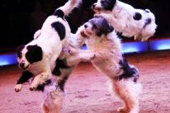Wolfgang hunden springen