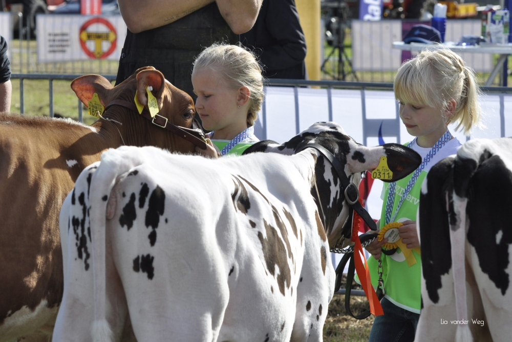 Paardendagen Walterswald Veekeuring Friesland (33)