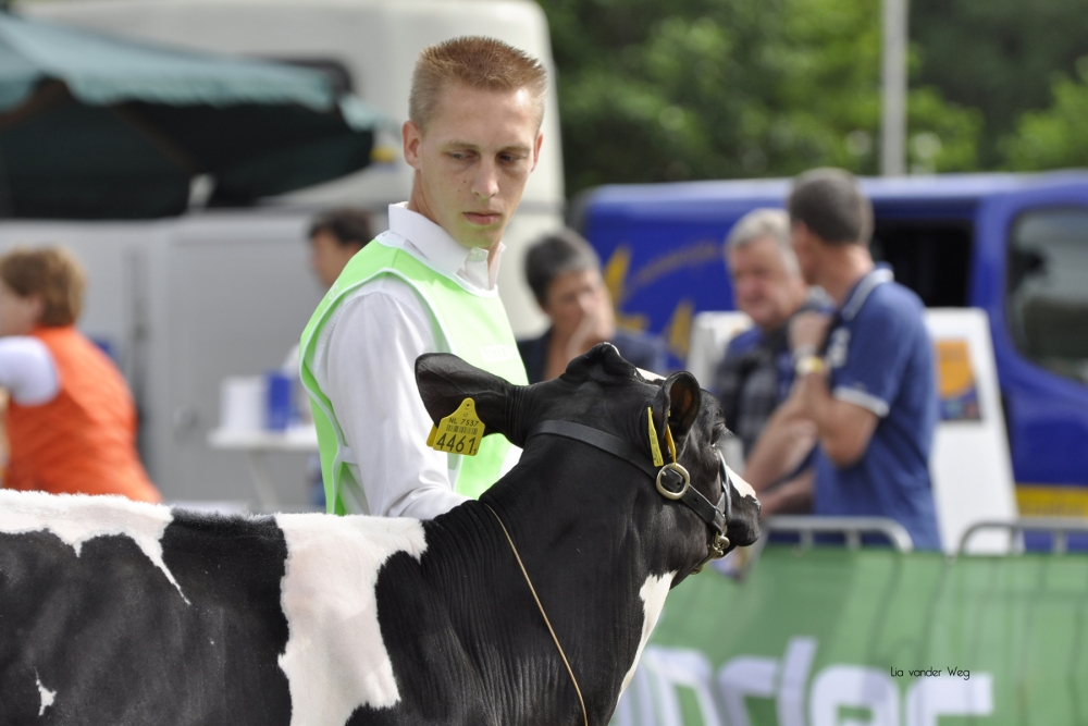 Paardendagen Walterswald Veekeuring Friesland (40)