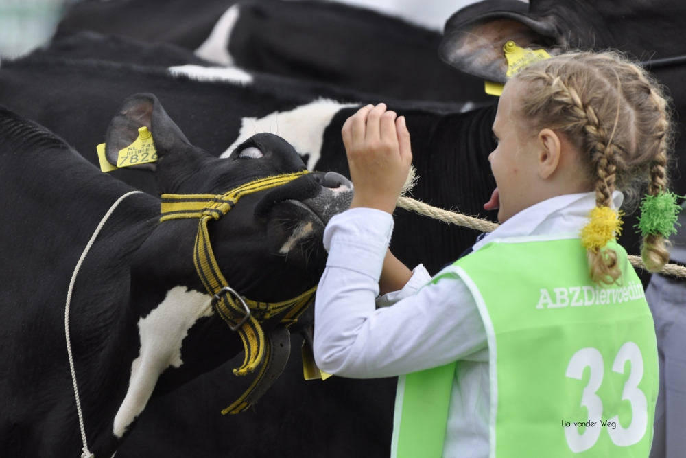 Paardendagen Walterswald Veekeuring Friesland (42)
