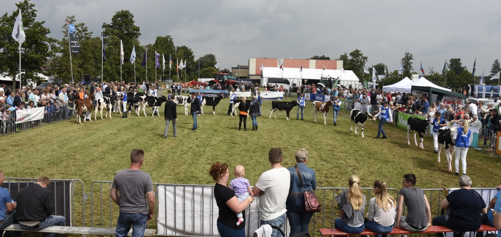 Paardendagen Walterswald Veekeuring Friesland (9)
