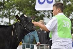 Paardendagen Walterswald Veekeuring Friesland (1)