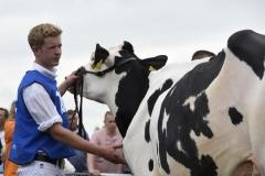 Paardendagen Walterswald Veekeuring Friesland (13)