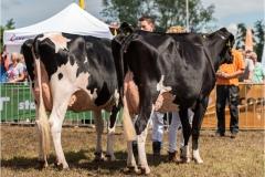Paardendagen Walterswald Veekeuring Friesland (22)