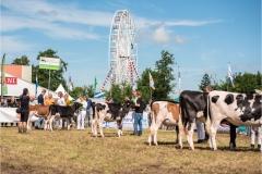 Paardendagen Walterswald Veekeuring Friesland (23)