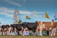 Paardendagen Walterswald Veekeuring Friesland (24)