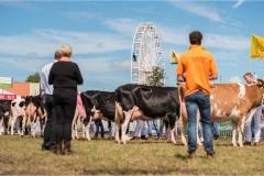 Paardendagen Walterswald Veekeuring Friesland (25)