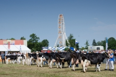 Paardendagen Walterswald Veekeuring Friesland (27)