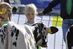 Paardendagen Walterswald Veekeuring Friesland (32)